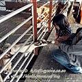 20130330-宜農牧場-12