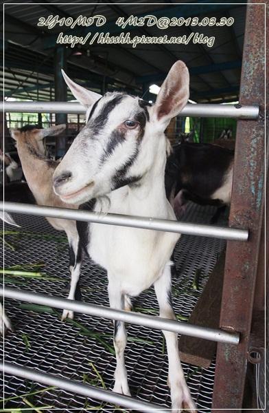 20130330-宜農牧場-15