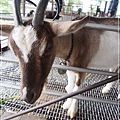 20130330-宜農牧場-17