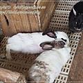 20130330-宜農牧場-19