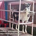 20130330-宜農牧場-21