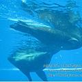 subic trip-20130723-7-OCEAN ADVENTURE.jpg
