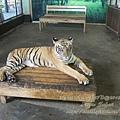 subic trip-20130725-4-zoobic safari.jpg