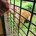 subic trip-20130725-14-zoobic safari.jpg