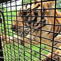 subic trip-20130725-15-zoobic safari.jpg