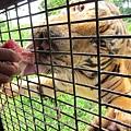 subic trip-20130725-16-zoobic safari.jpg