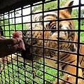 subic trip-20130725-17-zoobic safari.jpg