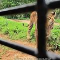 subic trip-20130725-18-zoobic safari.jpg