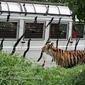 subic trip-20130725-19-zoobic safari.jpg