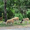 subic trip-20130725-21-zoobic safari.jpg