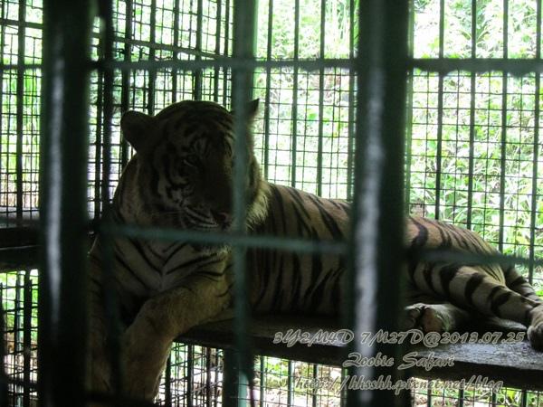 subic trip-20130725-23-zoobic safari.jpg