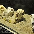 subic trip-20130725-27-zoobic safari.jpg
