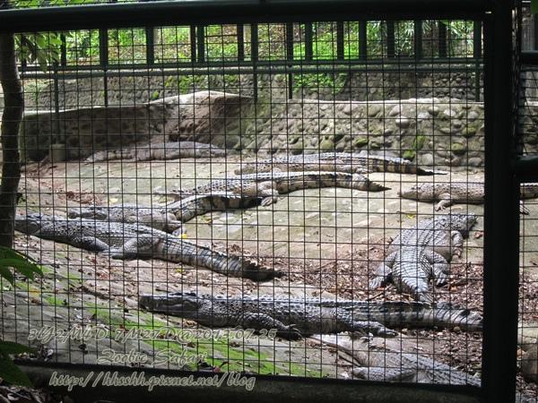 subic trip-20130725-30-zoobic safari.jpg