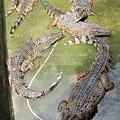 subic trip-20130725-37-zoobic safari.jpg