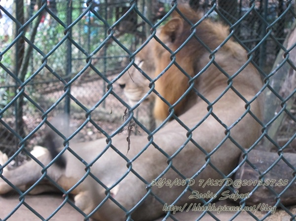 subic trip-20130725-47-zoobic safari.jpg
