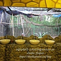 subic trip-20130725-61-zoobic safari.jpg
