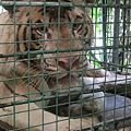 subic trip-20130725-65-zoobic safari.jpg