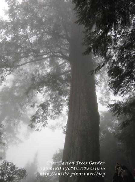 20131210-棲蘭神木園-24.jpg
