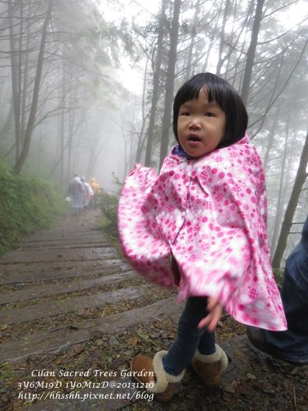 20131210-棲蘭神木園-26.jpg