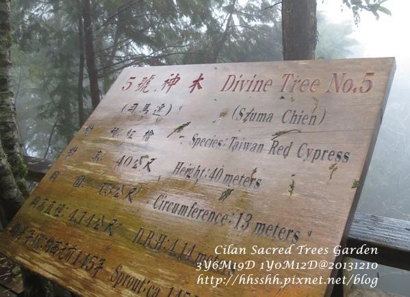20131210-棲蘭神木園-29.jpg