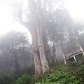 20131210-棲蘭神木園-28.jpg
