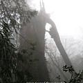 20131210-棲蘭神木園-33.jpg