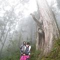 20131210-棲蘭神木園-41.jpg