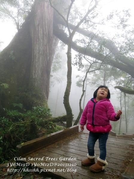 20131210-棲蘭神木園-46.jpg