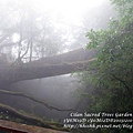 20131210-棲蘭神木園-47.jpg
