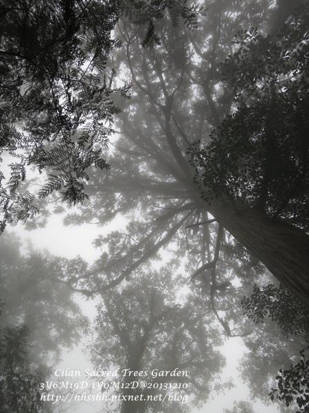 20131210-棲蘭神木園-52.jpg