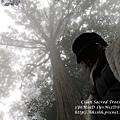 20131210-棲蘭神木園-53.jpg