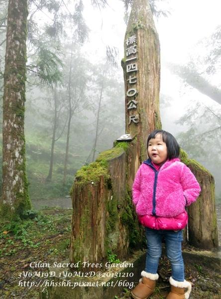 20131210-棲蘭神木園-56.jpg