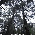 20131211-太平山-29.jpg