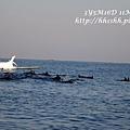 D7-dophin watching-13.jpg