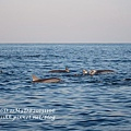 D7-dophin watching-14.jpg