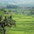 D7-34-Jatiluwih rice terrace.jpg