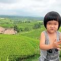D7-40-Jatiluwih rice terrace.jpg