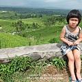 D7-43-Jatiluwih rice terrace.jpg