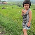 D7-44-Jatiluwih rice terrace.jpg