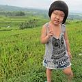 D7-45-Jatiluwih rice terrace.jpg