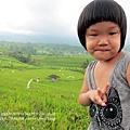 D7-46-Jatiluwih rice terrace.jpg