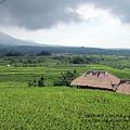 D7-51-Jatiluwih rice terrace.jpg