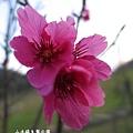 20140131-山水綠生態公園-23.jpg