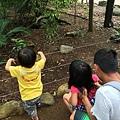 20150122-黃金海岸-currumbin wildlife sanctuary-11.jpg