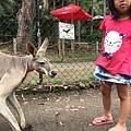 20150122-黃金海岸-currumbin wildlife sanctuary-17.jpg