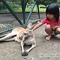 20150122-黃金海岸-currumbin wildlife sanctuary-22.jpg