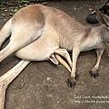20150122-黃金海岸-currumbin wildlife sanctuary-24.jpg