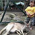 20150122-黃金海岸-currumbin wildlife sanctuary-23.jpg