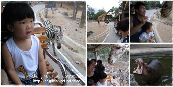 20150720-52-night safari.jpg