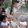 20150720-51-night safari.jpg